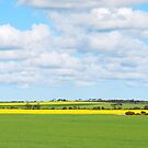 """Australia's """"green and gold"""" by Dusker"""