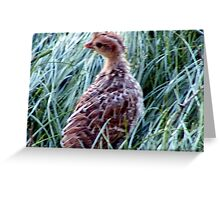 Lost Mountain Quail Chick Greeting Card