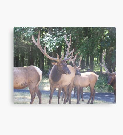 SANTA IS GETTING HIS REINDEER READY FOR CHRISTMAS EVE  Canvas Print