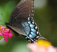 Butterfly Garden by MShelsby