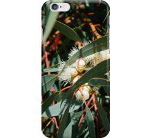 White Eucalyptus iPhone Case/Skin