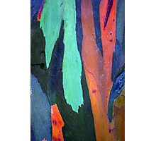 Caribbean Bark Serie #3 Photographic Print