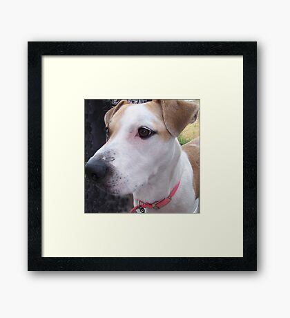 interested jerzy Framed Print