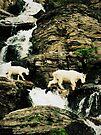 mountain goat adventure by schizomania