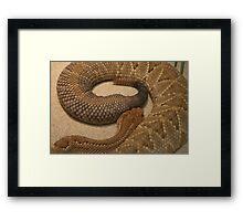 Rattle Framed Print