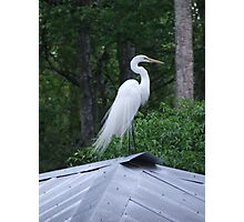 The Tin Roof Photographic Print