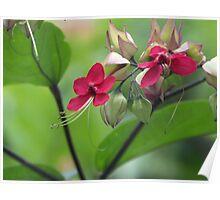 Floral Surprise Poster