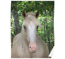 Palomino In The Woods Poster