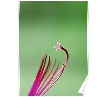 Geranium stamens Poster