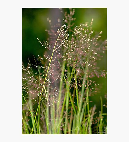 Memories of Springtime Photographic Print