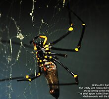 Golden Orb Spider by rodesigns