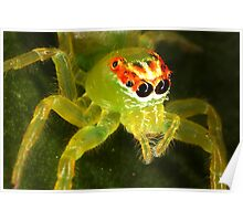 Green Jumping Spider Poster
