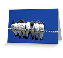 Seven Swallows Sitting Greeting Card