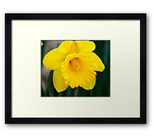 Sunshine Yellow Framed Print
