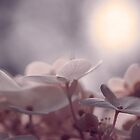 Softly in the pink sunshine by Denise Couturier