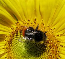 Bee My Guest by Detlef Becher