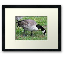 Proudly Canadian Eh? Framed Print