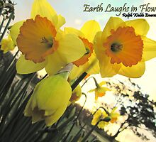 Earth Laughs in Flowers by Sherene Clow
