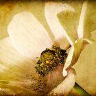 *anemone* by funkymarmalade