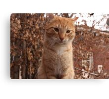 Beautiful Magestic Orange Cat with leaves behind Canvas Print