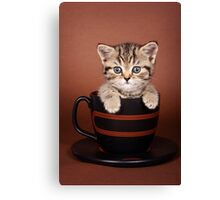 Funny striped kitten in a cup Canvas Print