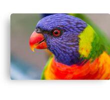Closeup of Rainbow Lorikeet Canvas Print