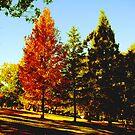 The Autumn Tree by Ellavon