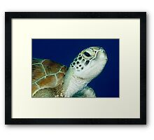Hello ~ Green Turtle Framed Print