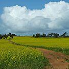 The Track - near Northam, Western Australia by Karen Stackpole