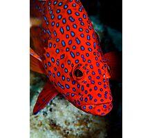 Polka Dots - Cocos (Keeling) Islands Photographic Print