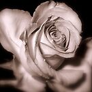 Rosebud Victoriana by naturelover