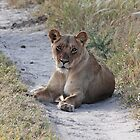 Lioness of the Kalahari by Adrian Paul