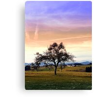 Old tree and amazing cloudy sky   landscape photography Canvas Print