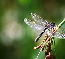 Dragonfly by dannytheniceguy