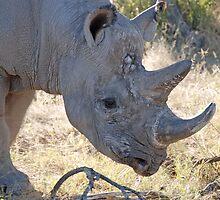 Black Rhino, Khama Rhino Sanctuary, Botswana, Africa by Adrian Paul