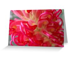 Grevillea  Curls Greeting Card