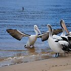 Pelican by johnbruceross