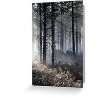 22.5.2015: Spring Morning in Pine Tree Forest Greeting Card