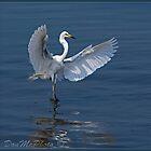 Great Egret (Ardea alba) 15-04 (V) by DonMc