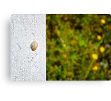 Snail shell and the negative space Canvas Print