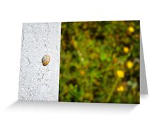 Snail shell and the negative space Greeting Card