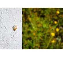 Snail shell and the negative space Photographic Print