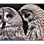 Owls in Love by bared