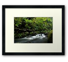 Small stream in the Waipoua Forest Framed Print
