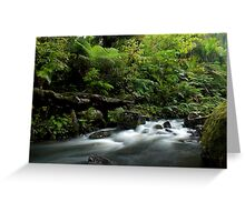 Small stream in the Waipoua Forest Greeting Card