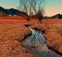 A stream, dry grass, reflections and trees | waterscape photography by Patrick Jobst