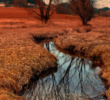 A stream, dry grass, reflections and trees | waterscape photography Sticker