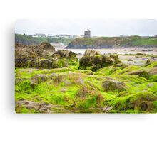 ballybunion castle algae covered rocks Canvas Print