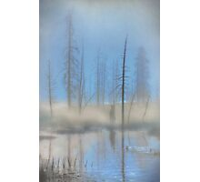 Tree Skeletons at Dawn.  Yellowstone National Park. Wyoming. USA. Photographic Print