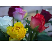 Coloured Roses  Photographic Print